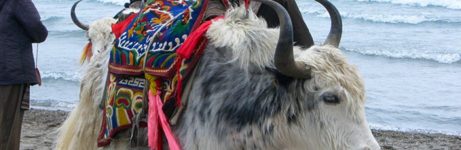 Sherpa Expedition And Trekking Cover Image