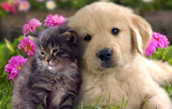 Comfortable Pet Care Services By The Vet In Abbotsford